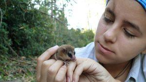 Monito del Monte: Uno de los marsupiales más pequeños del mundo está en Oncol