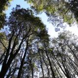 Reabren Parque Nacional Alerce Costero en Los Ríos