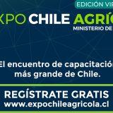 Autoridades invitan a participar de la Expo Chile Agrícola 2020