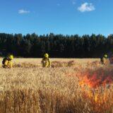 Director de CONAF Los Ríos hace positivo balance por menor ocurrencia de incendios forestales en la región
